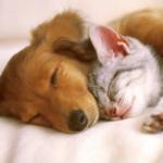 大自然安眠曲-睡眠,安眠,冥想