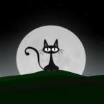 夜猫情感故事