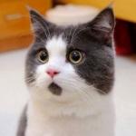 猫猫脱口秀
