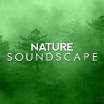 大自然的声音:竹林流水鸟鸣