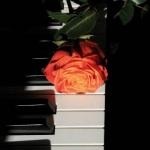 钢琴助眠电台:在陶醉中入睡